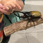 クワガタ、カブトムシ好きは、横浜のみんなの世界昆虫展へ急げ
